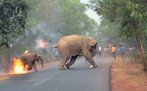 An adult elephant and a calf on fire flee a crowd of people