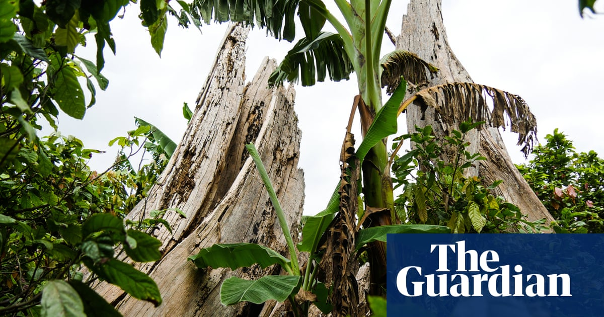 Ivory Coast law could see chocolate industry 'wipe out' protected forests