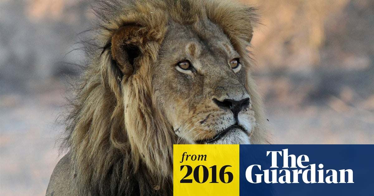 Trophy hunting could help conserve lions, says Cecil the lion
