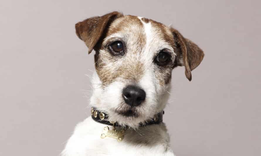 Uggie – 'a dog with a seemingly human range of expressions'.