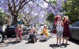 Local and international visitors flocked to McDougall Street in the Sydney suburb of Kirribilli in November as jacaranda trees came into bloom.
