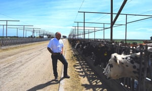 Mark McAfee, founder of Organic Pastures, the nation's largest raw milk dairy farm.