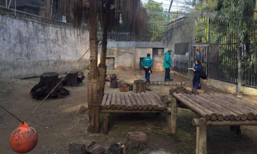Chilean police at the Metropolitan Zoo in Santiago after a man climbed into the lion enclosure and was severely mauled.
