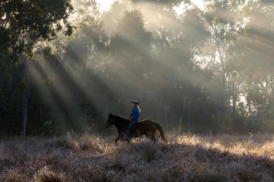 Sunrise, fetching horses after a couple of days off on a property near Mutchilba, Queensland.
