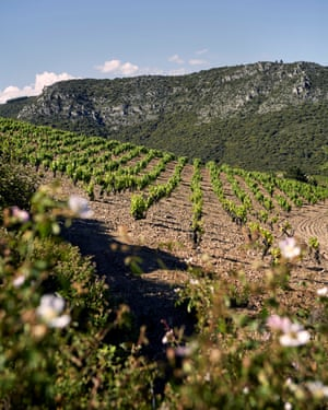 St John's vineyard for their Boulevard Napoleon winery