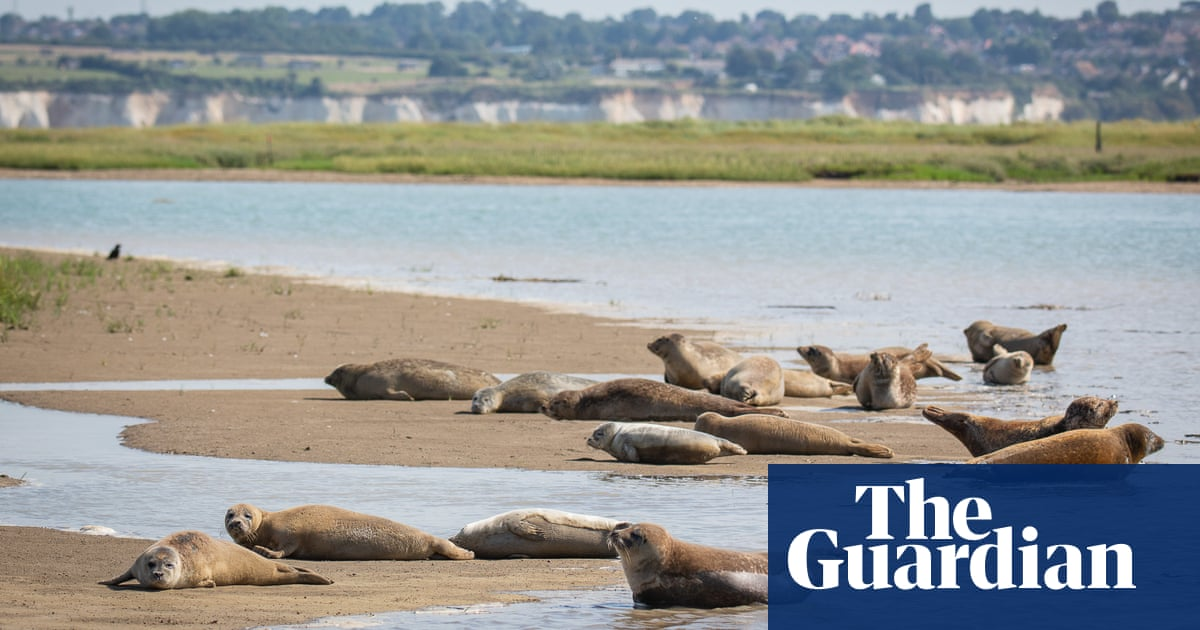River of life: zoo's yearly count finds seals thriving on Thames