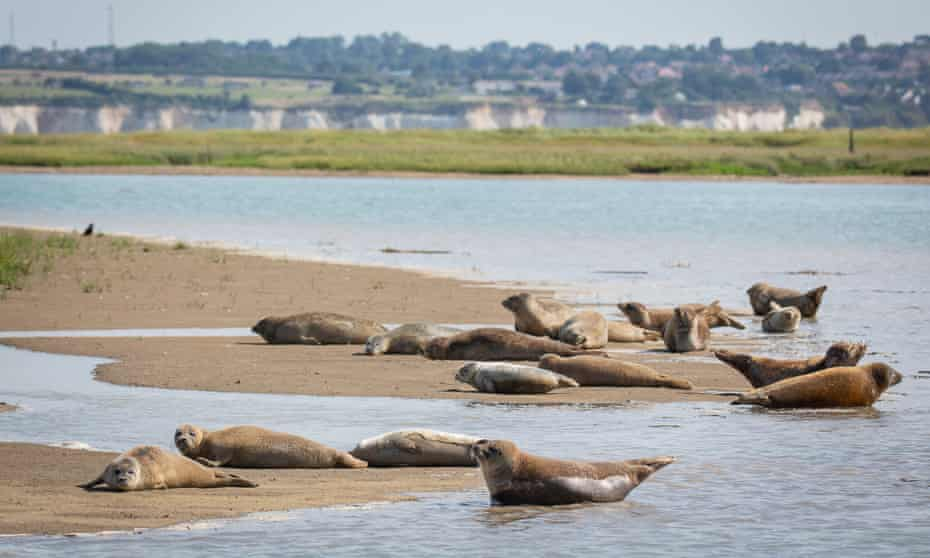 Seals on sandbanks
