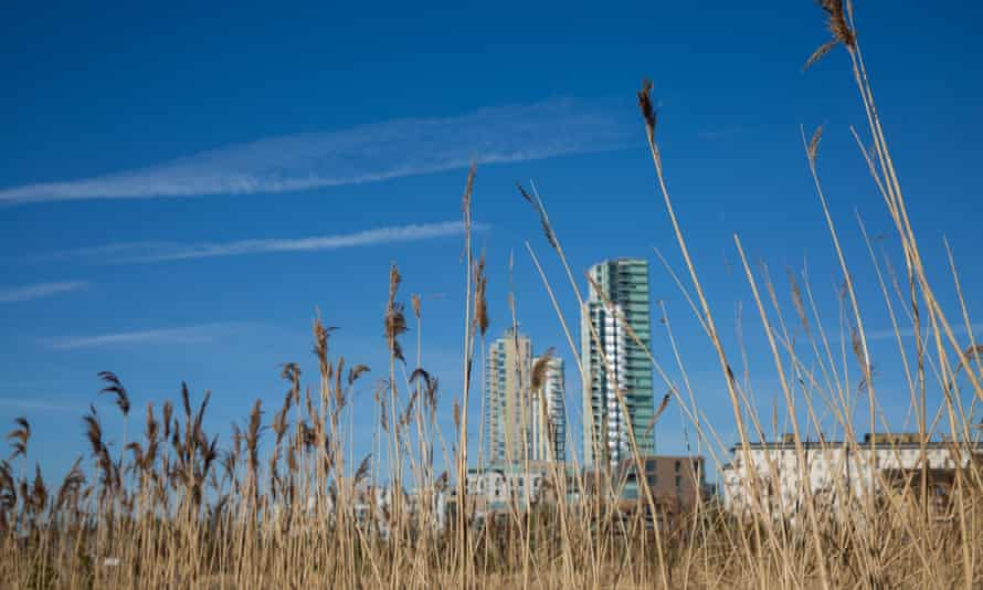 Reed bank at Woodberry Wetlands in the Borough of Hackney