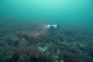 An area is surveyed by underwater drone filming the bottom habitat