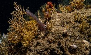Deep ocean ecosystem