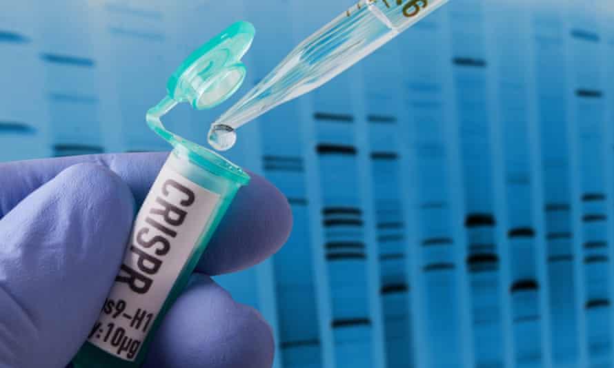Crispr research in a laboratory