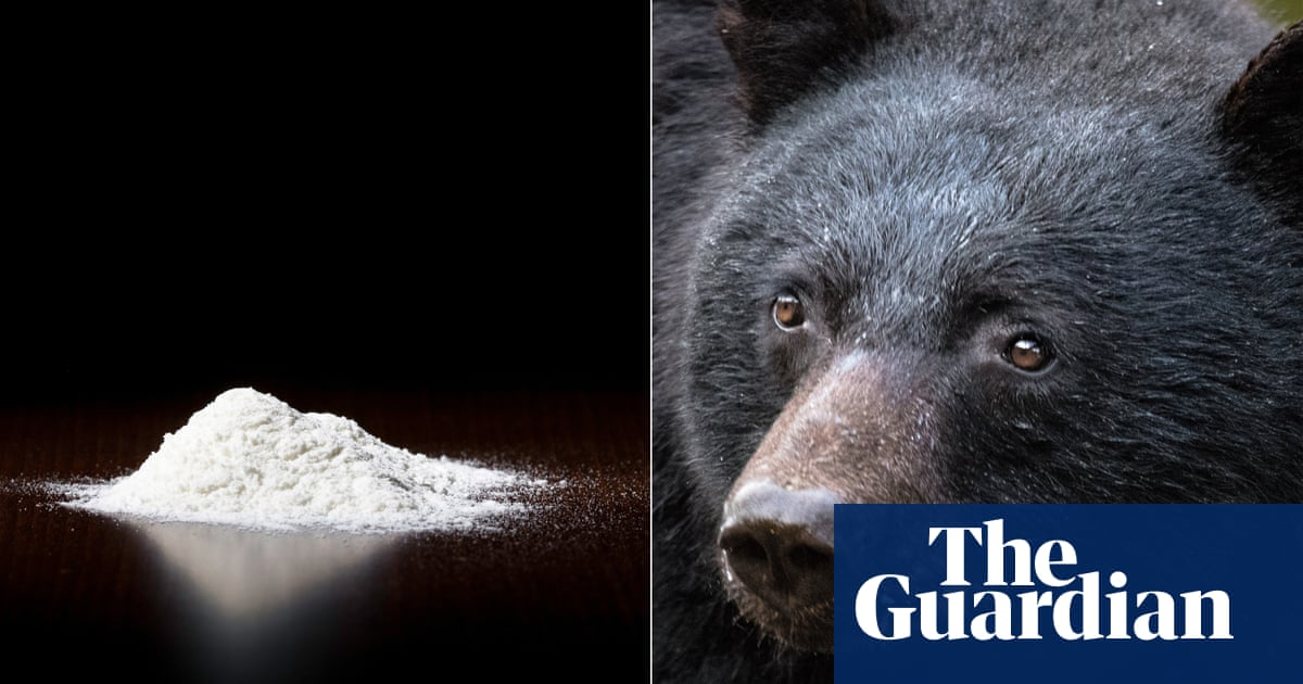 Cocaine Bear: the must-see and must-avoid movie of 2022
