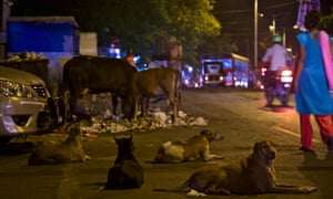 Stray dogs and cattle gather at a garbage dump on the city streets of Mumbai.