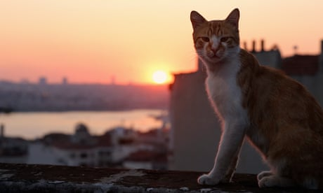 Kedi review – a cat's-eye view of a changing community
