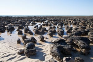 Stromatolites at Hamelin pool, which emerge from the water as the tide goes out.
