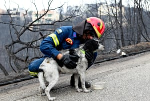 A firefighter take out a dog from burning house in Mati