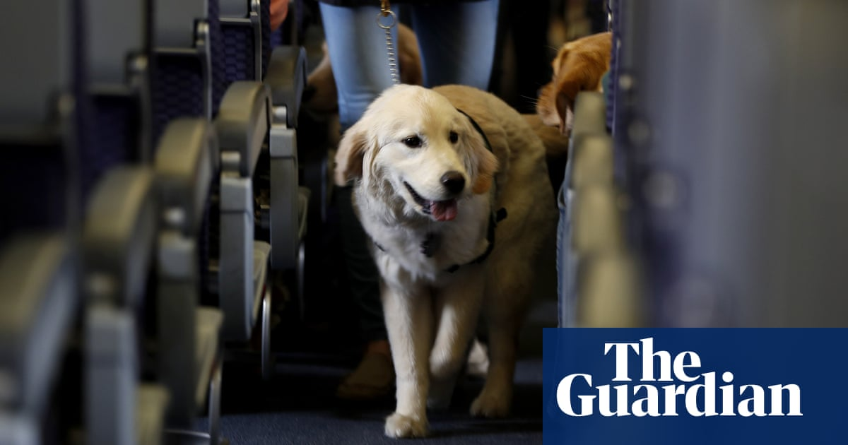 No horses or peacocks: US limits service animals on planes to dogs