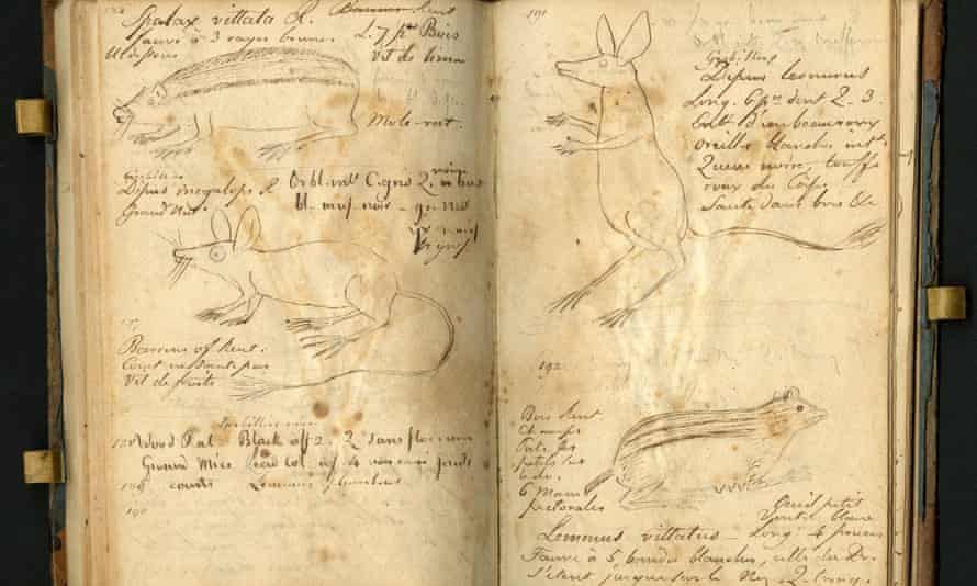 A page from Constantine Rafinesque's field notebook.