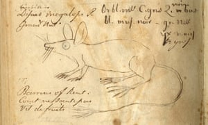An Eccentric Naturalist's notes ... a page from Constantine Rafinesque's field notebook showing (clockwise) the 'big-eye jumping mouse'.