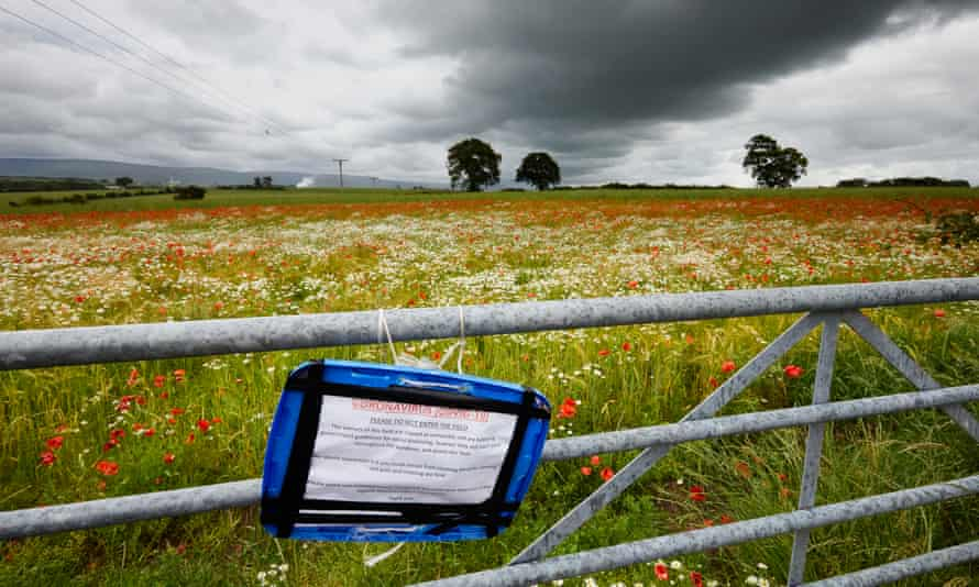 A gate with a Covid-19 notice in front of a field of poppies along the Eden Valley, Cumbria.