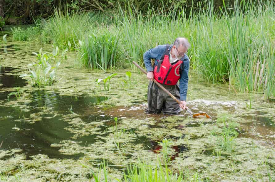 Will Watson fishes out water beetles