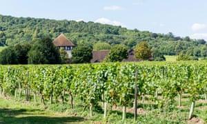 Denbies wine estate, Surrey, UK.