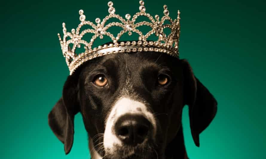Dog wearing tiarra