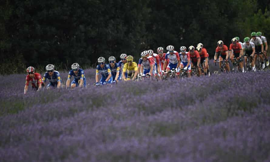 The riders pass by a field of lavander during the seventeenth stage between Pont du Gard and Gap.