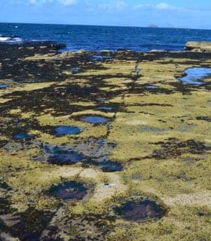 Sauropod tracks from the Isle of Skye.