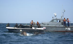 A patrol craft from the Sri Lankan Navy rescues  two elephants that were swept out to sea off the east coast of Sri Lanka