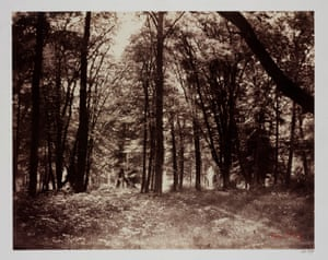 Gustave Le Gray, Bas-Breau, in the Forest of Fontainbleau, 1852