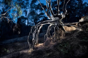 Bush Study #9, tree roots, Hill End 2018