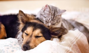 'Enmity is far from inevitable, given the way that dogs and cats alike learn the difference between friend and foe.'