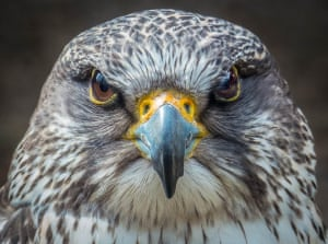 Eagle EyePhotograph: Colin Page/GuardianWitness