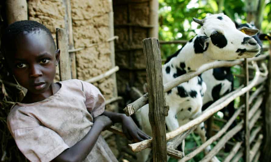 A young child on a goat farm in the mountains near Mbale, Uganda.