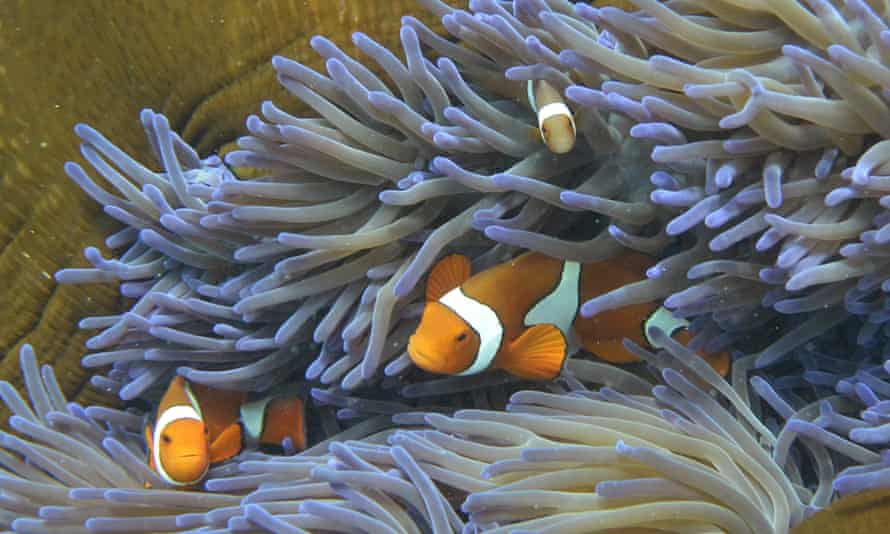 Fish swimming through the coral on Australia's Great Barrier Reef.