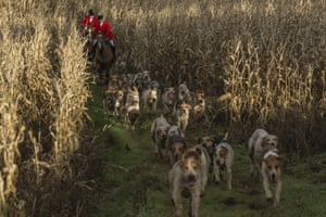 Riders follow the dogs during the Old Surrey and West Kent Boxing Day Hunt in Chiddingstone Causeway, England.