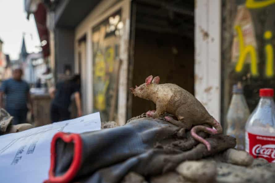 A toy rat