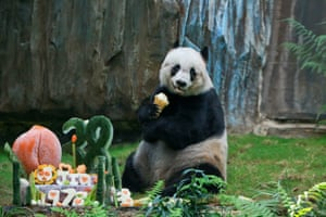 We need to start thinking about geriatric pandas. Now!