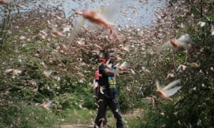 A farmer tries to chase away a swarm of desert locusts in the bush near Enziu, Kitui county, Kenya, on 24 January.