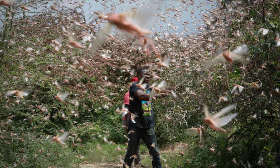 A farmer tries to chase away a swarm of desert locusts in the bush near Enziu, Kitui county, Kenya, on 24 January.