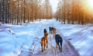 Husky Dogs in Sled in Rovaniemi in Finland Lapland sunset