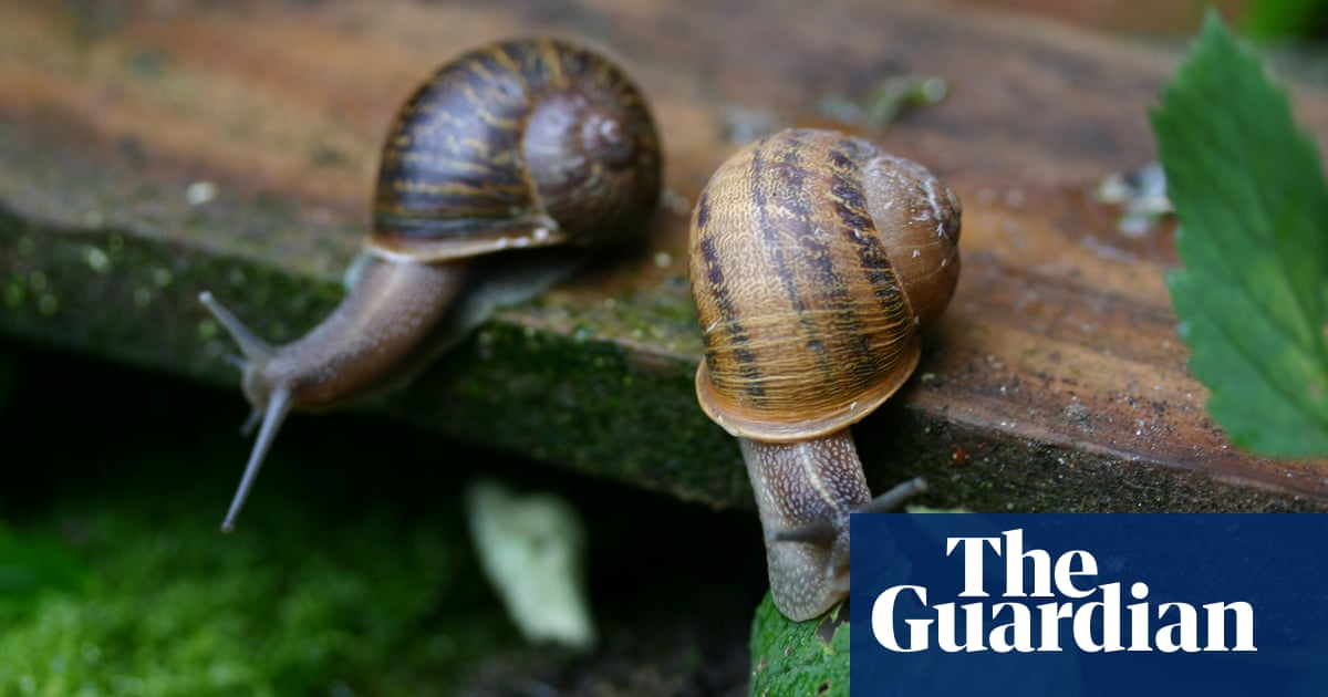 Are Snail Slime Products Worth Shelling Out For Fashion