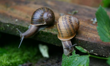 Slow but not very sure … two snails in waiting.