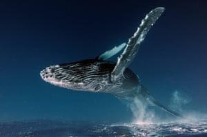 Underwater category winner  Up in the Air by Alexey Zozulya (Russia)