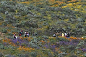 A 'super bloom' of wildflowers covers the hills around Diamond Valley Lake in California, US
