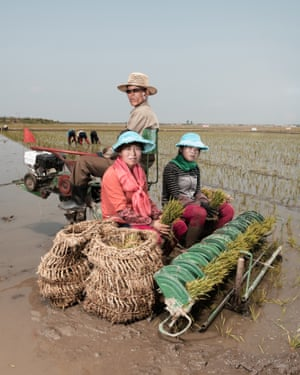 Three workers planting rice in Sariwon collective farm (June 2018)