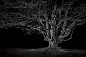 Beech Pollard, 2020Over a three-year period, Goodall has visited areas of British forest and moorland to make images that he refers to as being 'more akin to fairytale than documentary'. There is indeed an unreal quality to the images, and this is perhaps a result of using artificial lighting; it reminds one of those spooky, unnaturally lit forests we see in the movies.