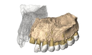 An illustration of how the fragment of jaw may have matched with its missing half.