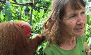 A bald-headed uakari monkey grooms Gudrun Sperrer, founder of the Pilpintuwasi Animal Orphanage